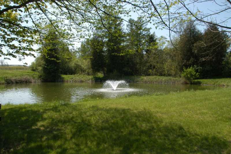 Stocked Pond, Fish, Fountain