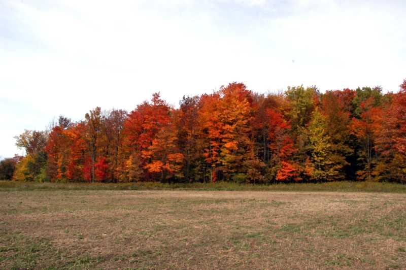 Hardwood forest, 10 Acre Building Lot for sale