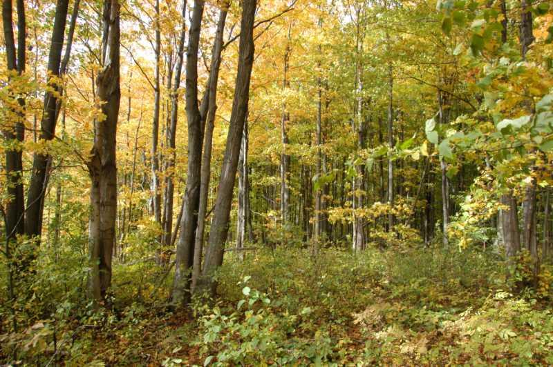 For sale, hardwood forest lot on 10 acres,
