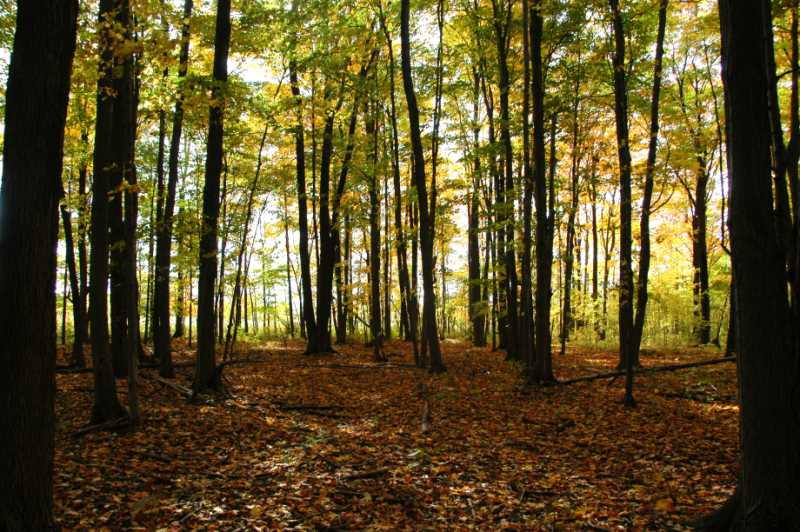 For Sale, 10 Acres of Land, Hardwood Forest in Back