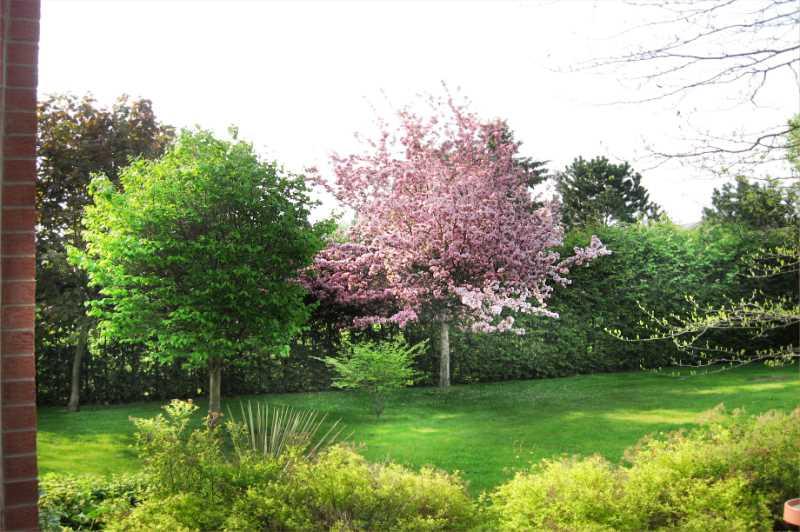 18 Tree Varieties
