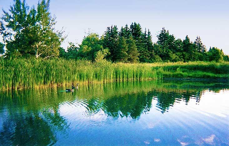 pond, 10 Acres, Orangeville, Amaranth