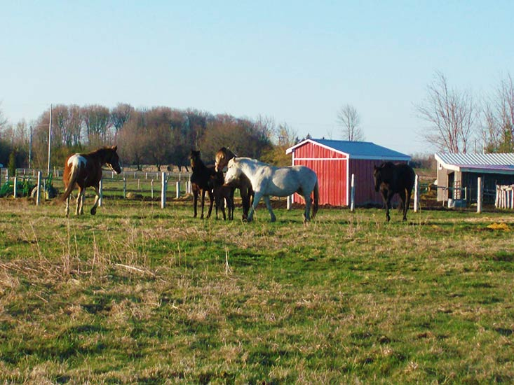 20th Sideroad, FOR SALE, Horse Farm