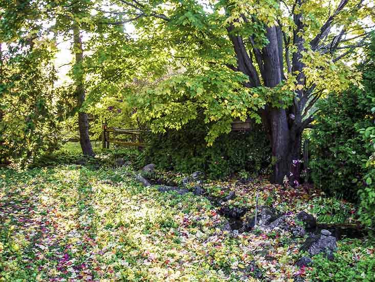 Stream, Caledon, Belfountain, backyard bliss