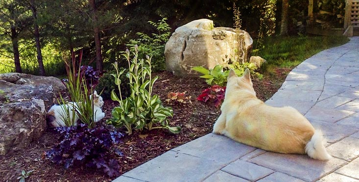 Dog, Sitting, Interlock, Stone