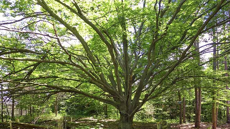 Caledon, Trees, Mary Klein, Kait Klein