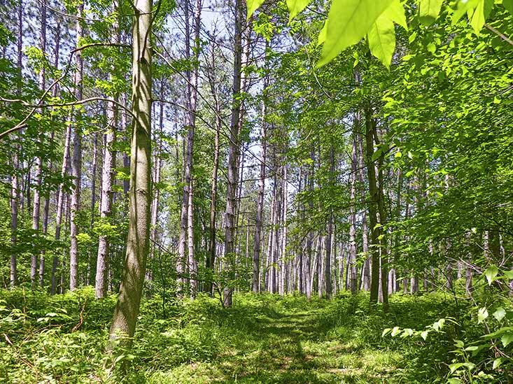 Trails, 68 varieties of Trees