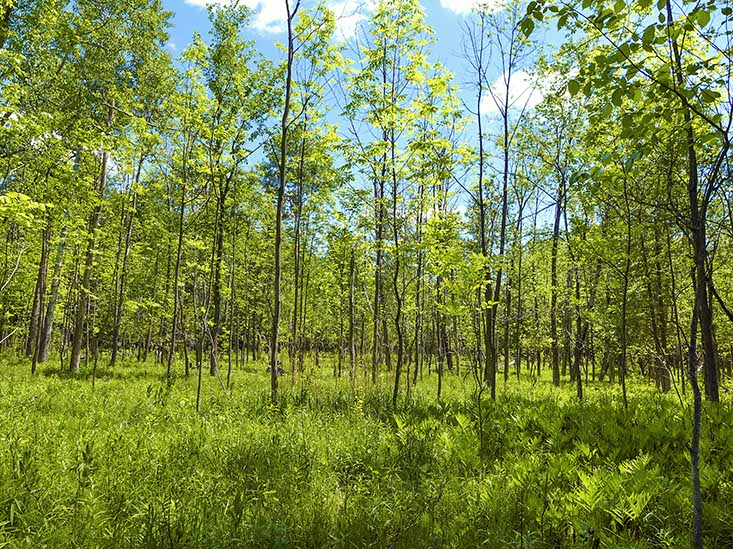 Private Property For Sale, 38 Acres, Managed Forest Program, Caledon