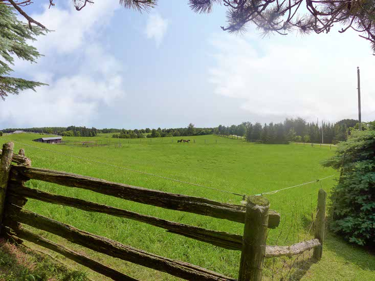 North Field, Fenced, Horses, Paddock, Split Rail Fence, Electric Fence