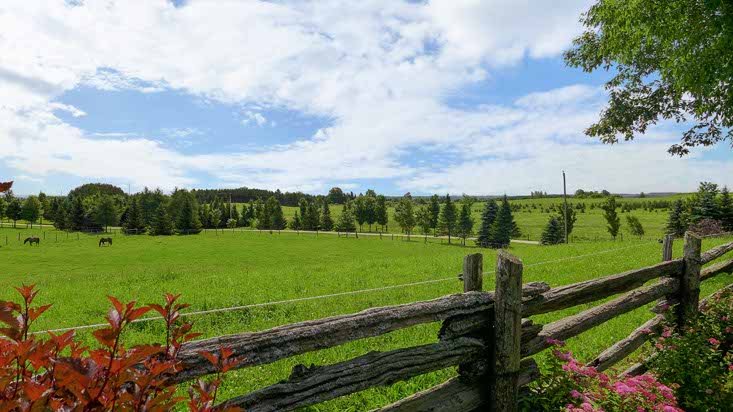 46 Acre Horse Farm, 1.5 Hours North of Toronto, 45 Mins to Brampton