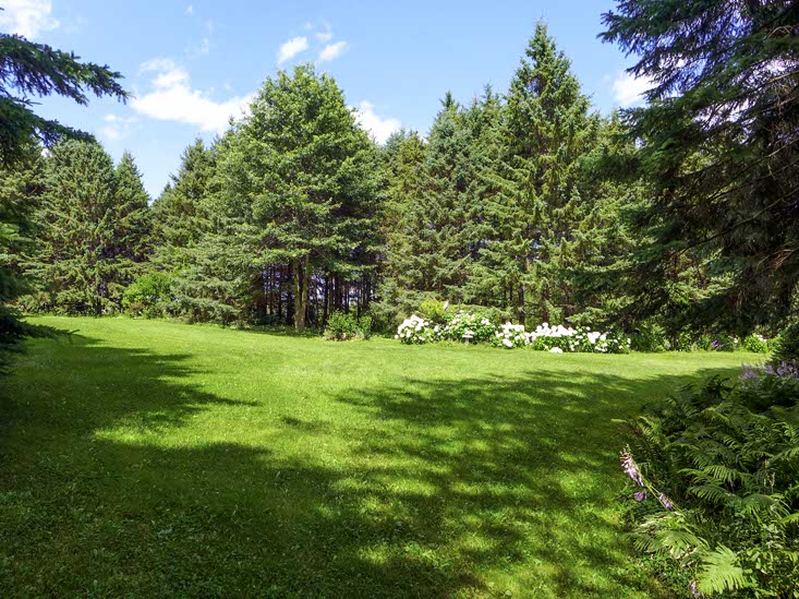 Tall trees, 20 Acres, For Sale, Mulmur, Mono