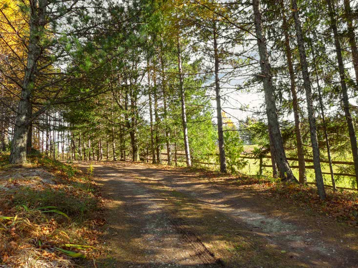 Circular Drive to Side Driveway