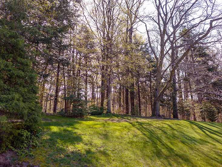 VIew, Forest, Backing onto Forest