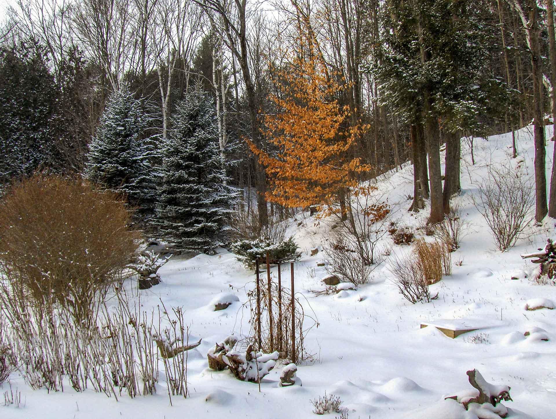 Gardens, Winter