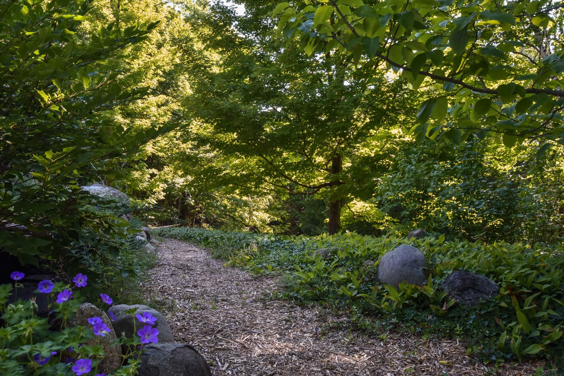Creek Walk, pathway, trail