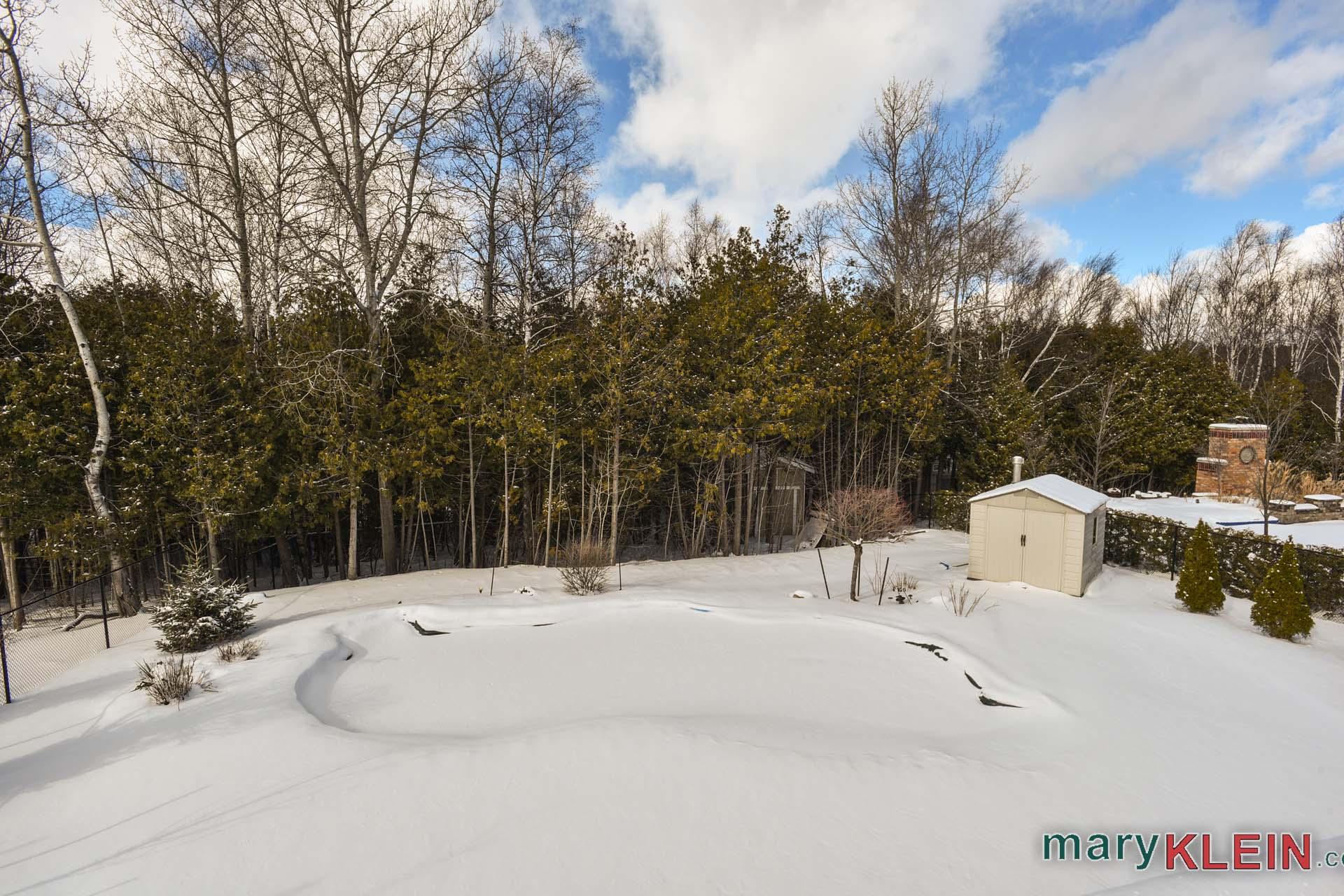 Backyard, winter
